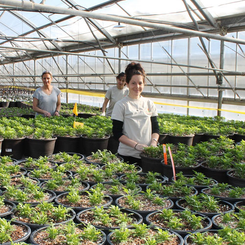 South Dakota greenhouse workers